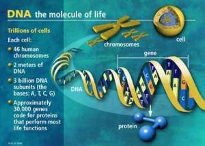 evoluzione_genetica