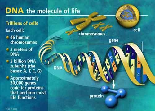 cancerul si genetica vindecă paraziții paraziți